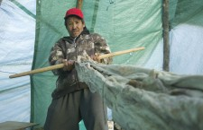 Peter Andrew of Tulita stretches a moose hide. The 48 year-old said on-the-land activities helped him process the classroom teachings.