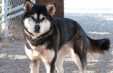 NWT receives low ranking for animal abuse laws