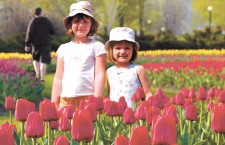 10 days in May: The enduring legacy of Ottawa's tulips