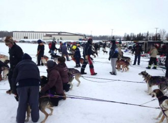 NWT mushers sweep Saskatchewan circuit races